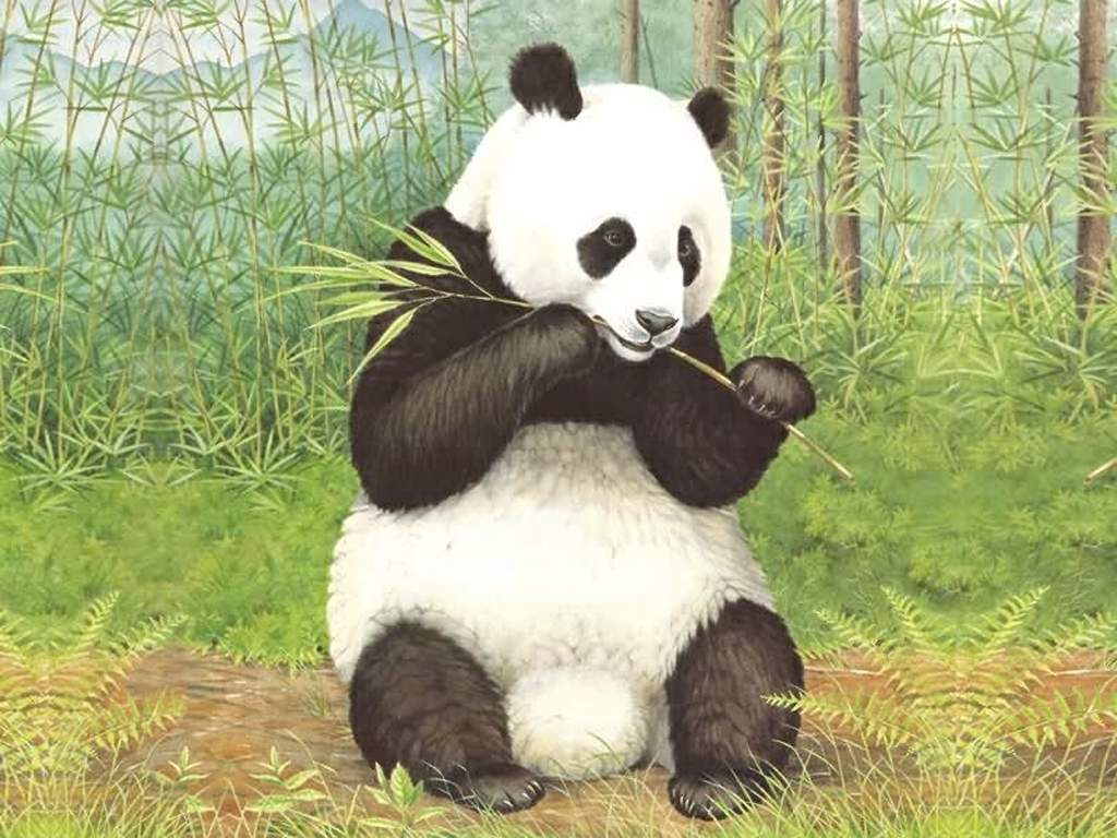 壁纸1024 215 768动物世界壁纸 动物世界壁纸图片 动物壁纸 动物图片素材 桌面壁纸