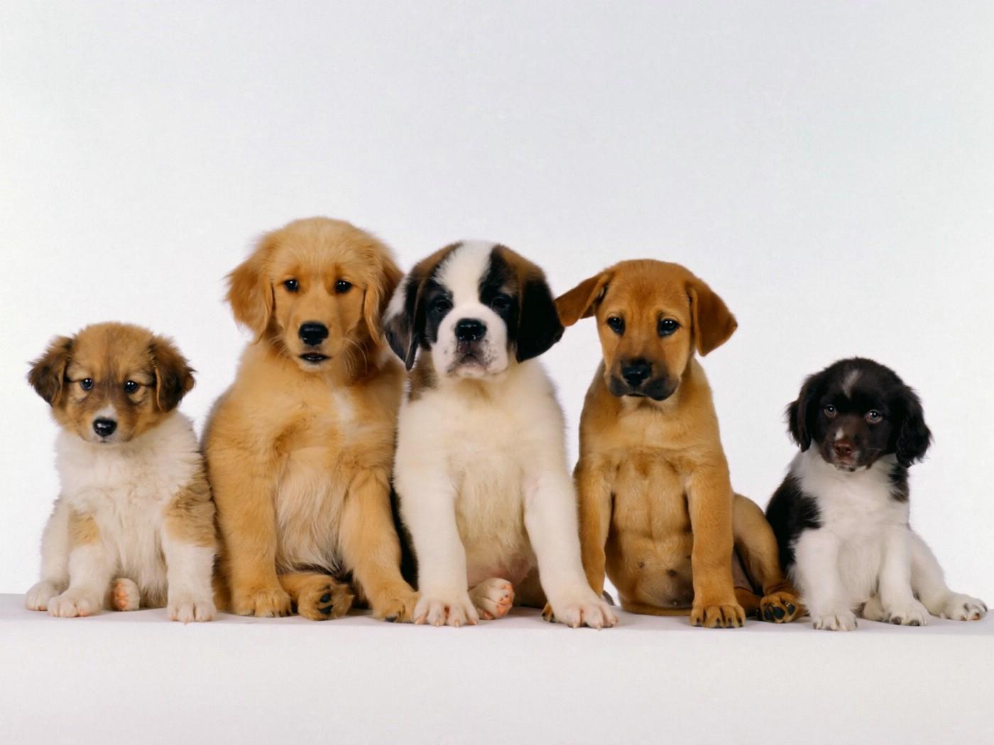 Santé chien