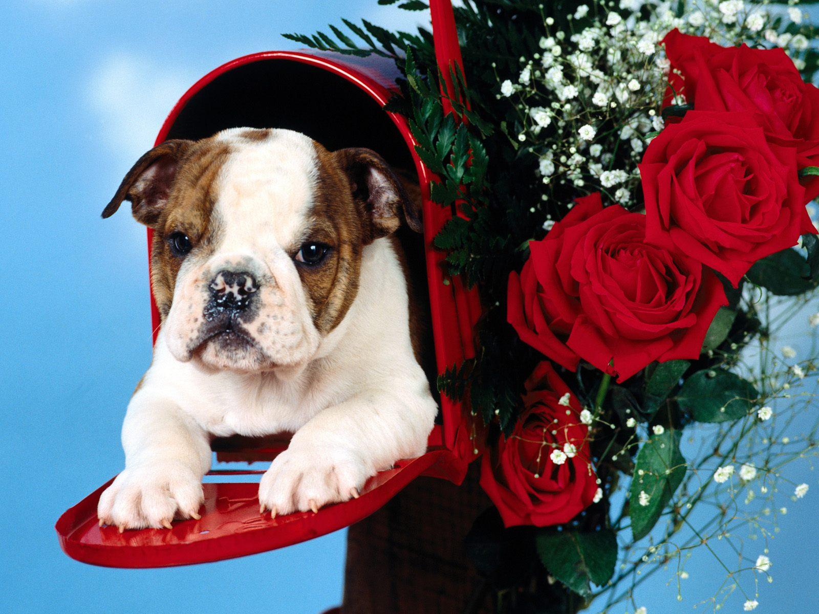 可爱 小狗/可爱小狗桌面壁纸下载
