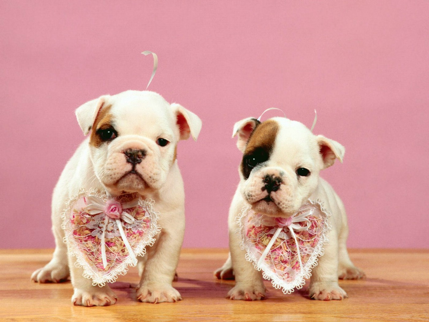 1400 1050 - Valentines day pictures with puppies ...