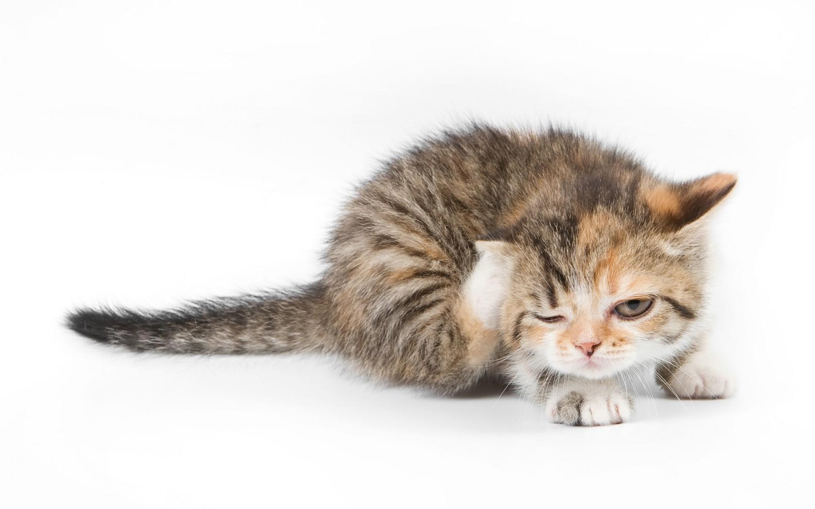 壁纸1680×1050可爱小猫壁纸1920x1200壁纸,可爱小猫壁纸