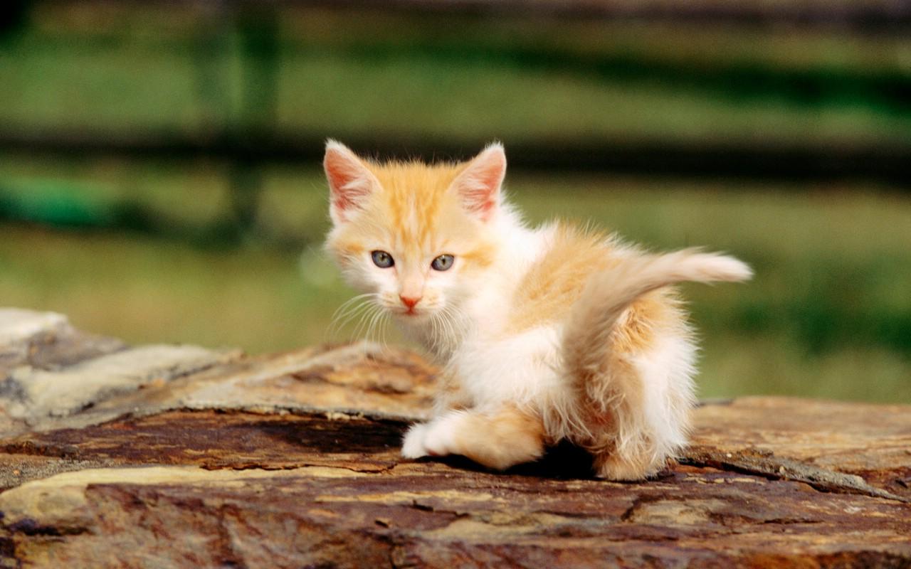 小猫萌图简笔画