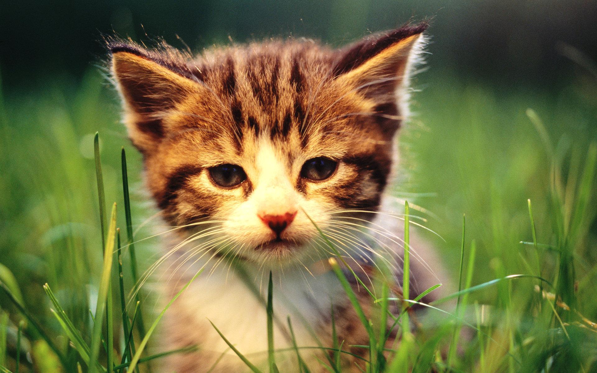 壁纸/可爱小猫咪宽屏壁纸