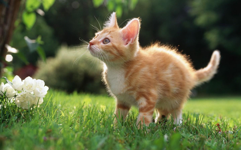 【沫子】喜欢小猫咪的进来 萌死人不偿命