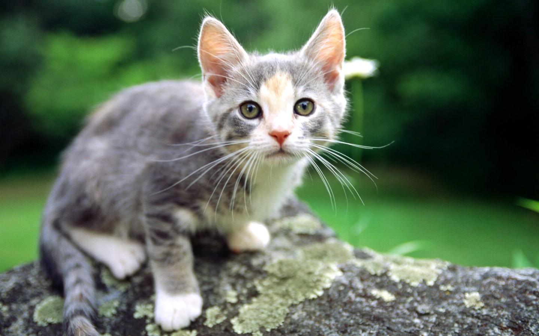 超萌可爱猫咪玩耍高清壁纸 pchome桌面壁纸