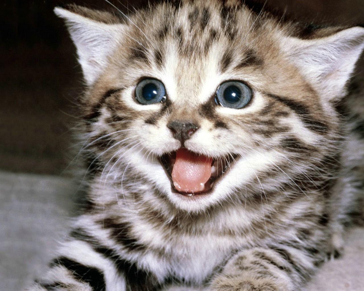 壁纸 动物 猫 猫咪 小猫 桌面 1280_1024