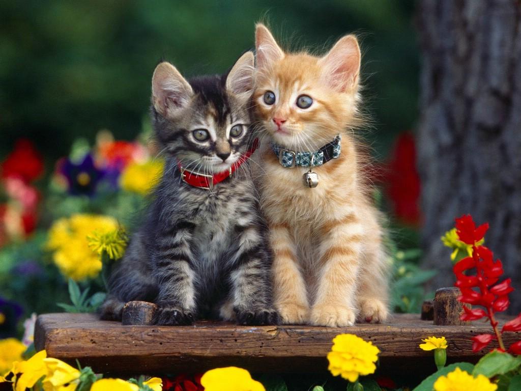 可爱小猫图片壁纸_可爱小猫动态壁纸_可爱小猫手机壁纸_综合快讯_青联