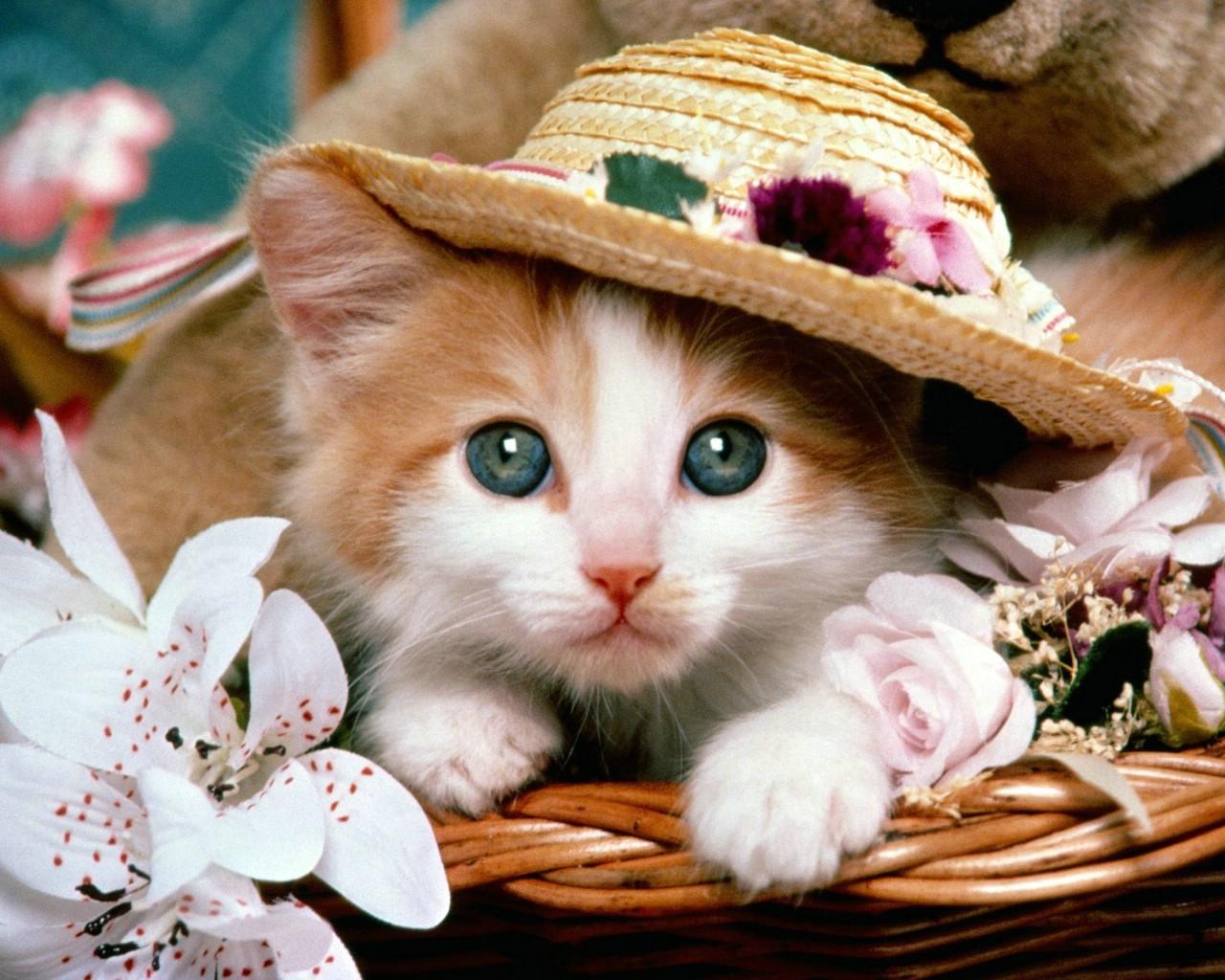 可爱图片全集_壁纸1280×1024可爱小猫桌面壁纸下载壁纸