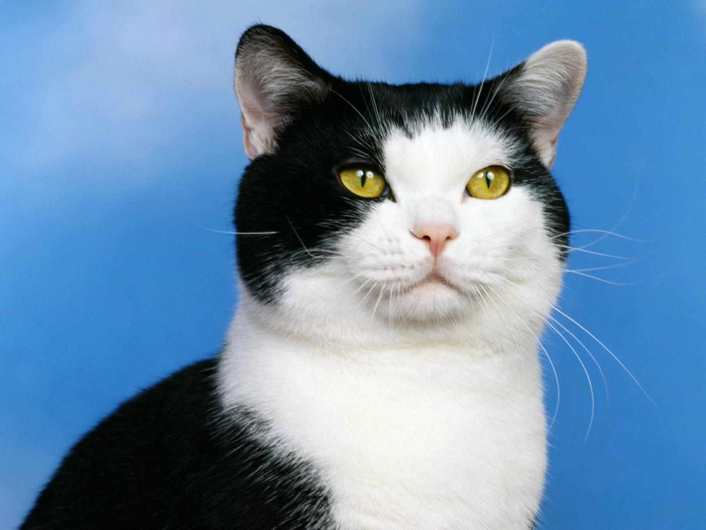 可爱小猫桌面壁纸下载壁纸图片动物壁纸动物图片素材桌面壁纸