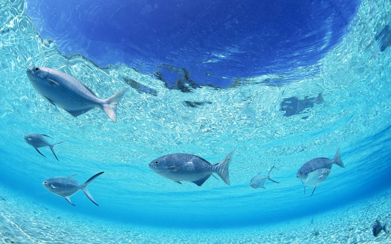 壁纸1280×800海洋世界动态桌面壁纸壁纸,海洋世界