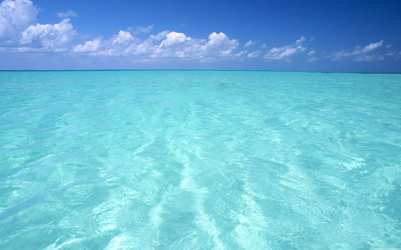 大海解说荒岛求生