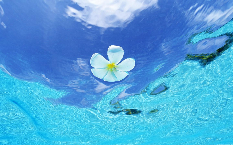 海洋世界动态桌面壁纸壁纸图片-风景壁纸-风景图片素材-桌面壁纸