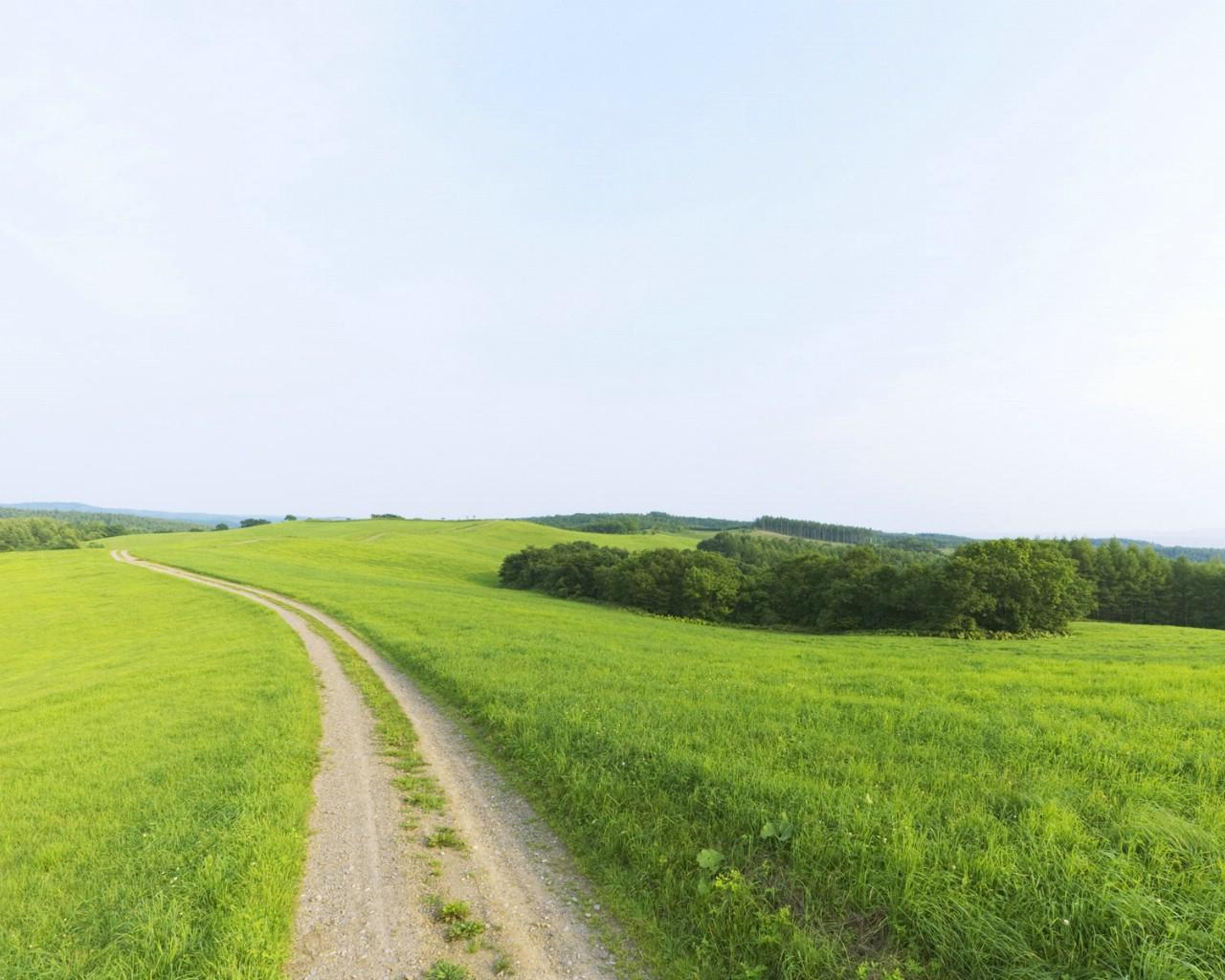 绿色风景桌面壁纸 - 青岛文化网