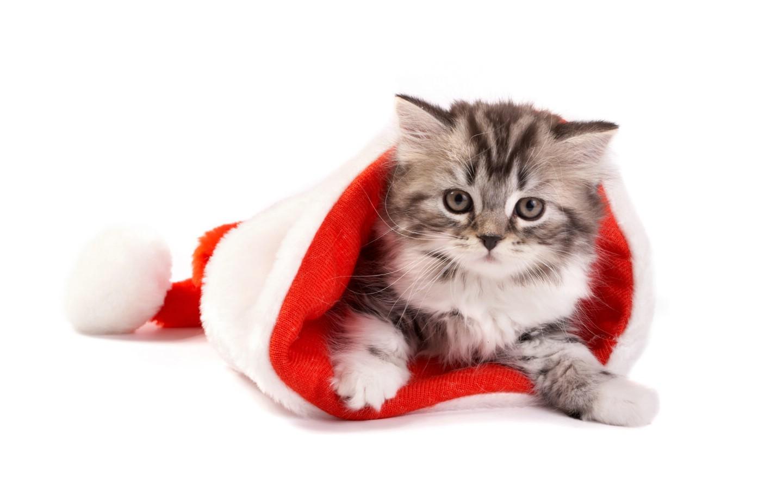 猫咪头像可爱清晰