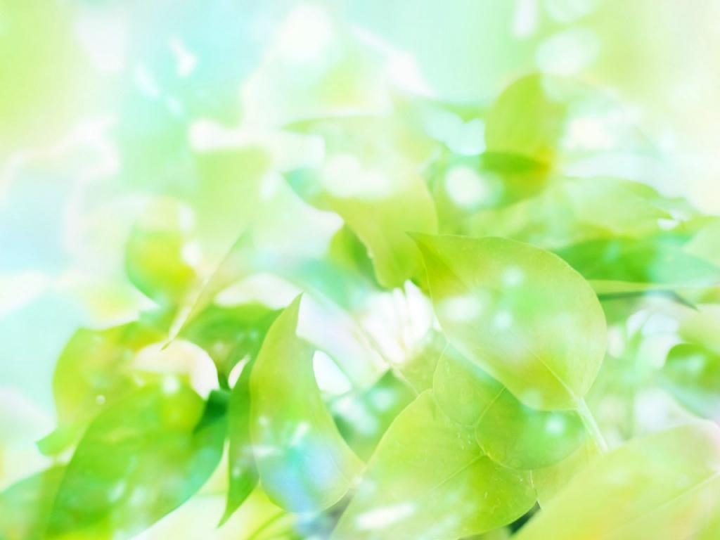 壁纸1024 215 768绿叶壁纸壁纸 绿叶壁纸壁纸图片 植物壁纸 植物图片素材 桌面壁纸